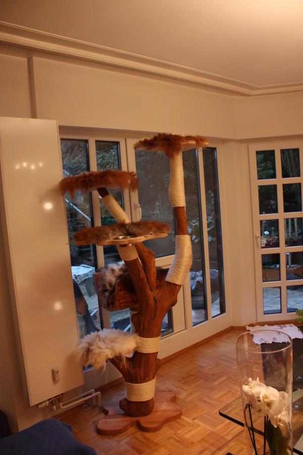 el regodeo 5 liegefl chen katzen eldorado. Black Bedroom Furniture Sets. Home Design Ideas